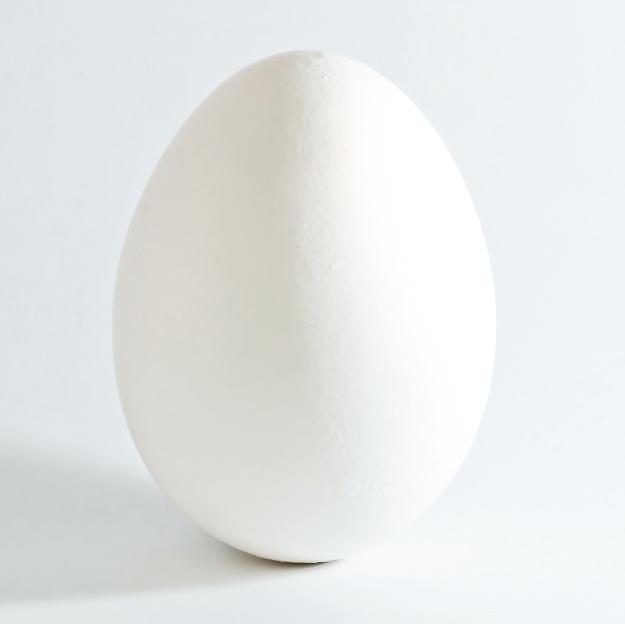 Flying 'Round the Egg