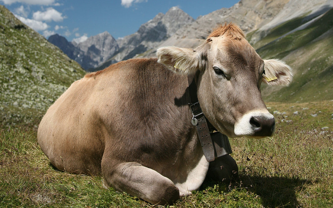APG 265 – German Cows are Out to Get You