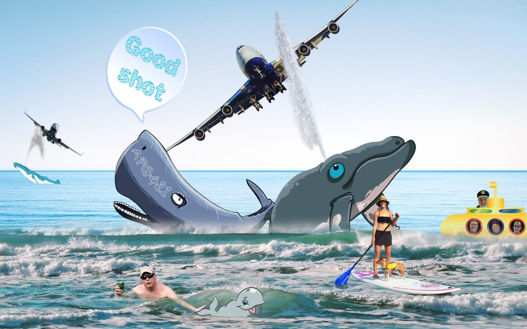 APG 421 – Caution: Whale Turbulence