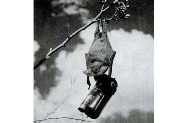 The Bat Bomb