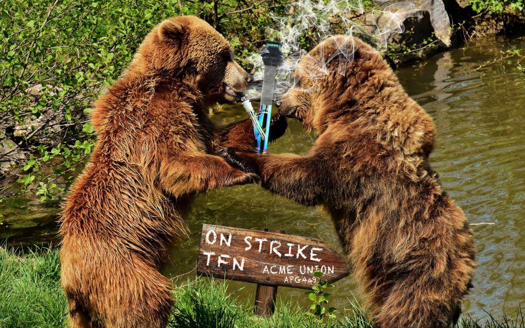 APG 449 – Bears and Bongs
