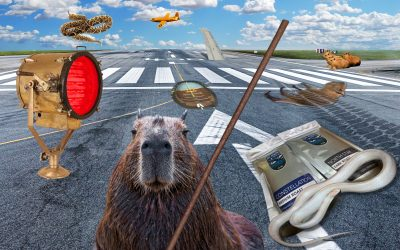 APG 456 – Runway Rodents, Flipping Snakes, and other Foreign Object Damage!